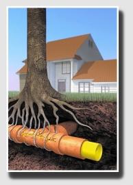Invasive_roots