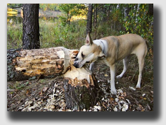 McCammon's excuse - the dog chewed off the boughs - didn't cut it with the jury.
