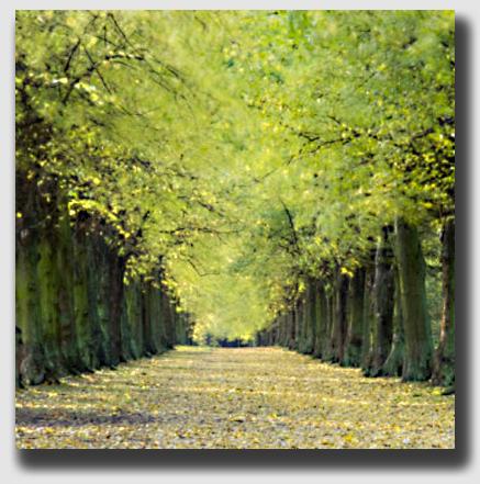 Elms make good boundary trees