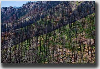 Over 71,000 acres were burned by a railroad crew's careless fire.