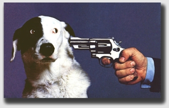 Shooting the Rileys dog was just plain wrong.