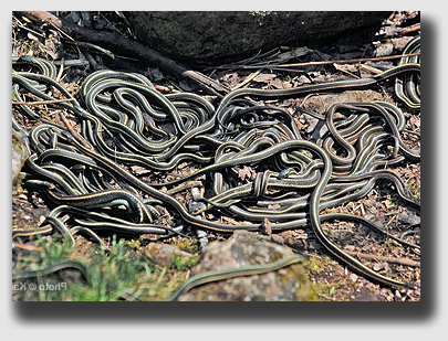 A few too many snakes? The Ledford's lawyer courted procedural trouble.