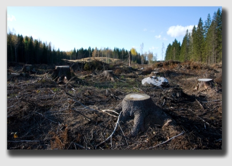 And what would have made Ms. Lewis happy? Perhaps if the Krussels had only clearcut their property ...