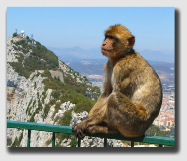 A monkey on Gibraltar ... but no monkeyshines at Gibralter Fire & Marine Insurance - the company wanted Mr. Griefield to pay.