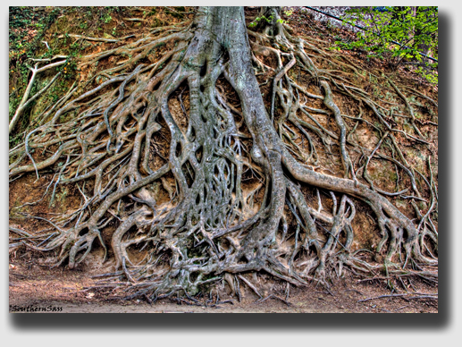 Superior should have trimmed the exposed roots, Colleen said, whether the contract said it should or not ...