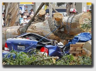 treefalloncar140212