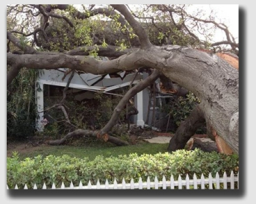 Sure Ms. Lewis's house was crushed ... but gravity did not turn the healthy tree that toppled onto her roof into a nuisance.