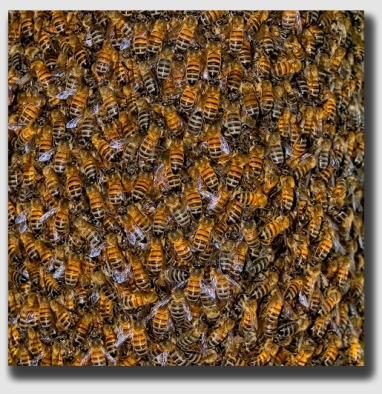 How many bees? Literally thousands ...
