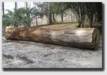 And just how big was the log?