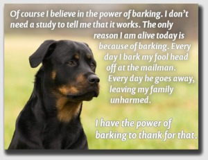 """Classic """"post hoc ergo propter hoc"""" reasoning ... but then, he's a dog.  What can you expect?"""