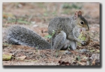 squirrel140408