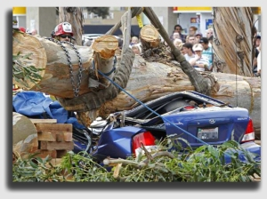 If the dead tree falls n a car, watch the scramble to avoid liability begin ...