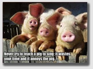 pigsing140623