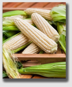 "Silver Queen - ""corn to the corners"" of your plate."