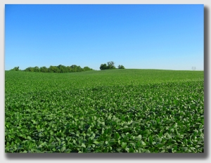 soybeans140721