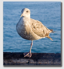 Did that plaintiff ever have gall ... or gull ... or cojones or something...