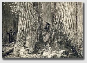 chestnuts141113