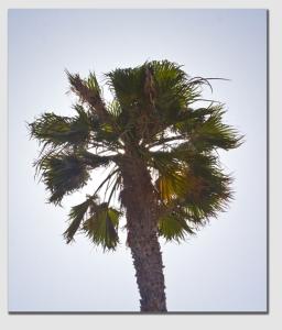 palm141209