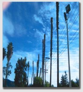 palms141219