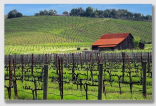 Napa Valley - idyllic, except when litigation rears its ugly head.