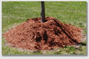 "The ""tree volcano"" ... pile dirt around the base, and suffocate the sapling."