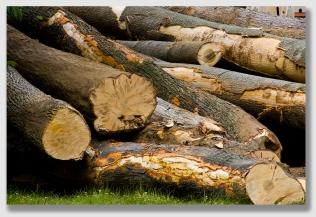 woodpile150202