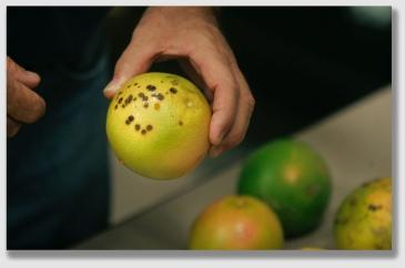 citrus150313