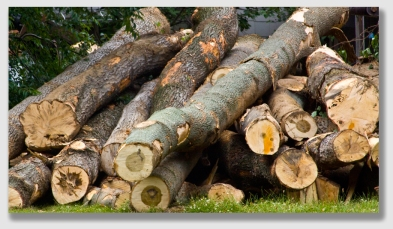 It's he present-day value of the commercial timber that matters.