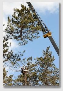 crane150312