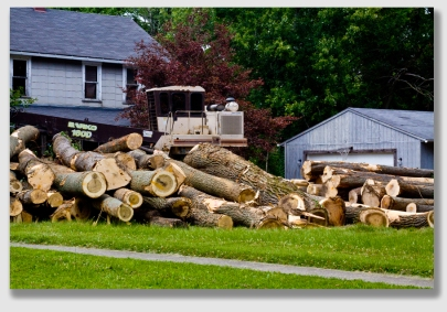 If you're dropping trees this close to the neighbor's house, you just may be in lines for paying some treble damages.