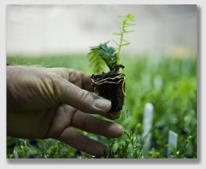 seedling150312