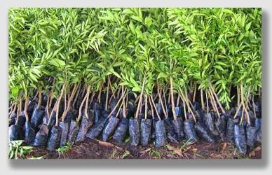 seedlings150311