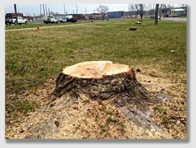 stump150325