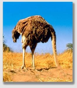 ostrich150416