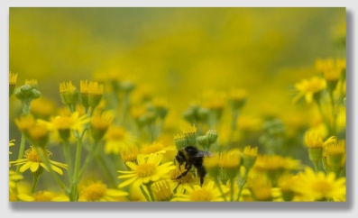 pollen150420