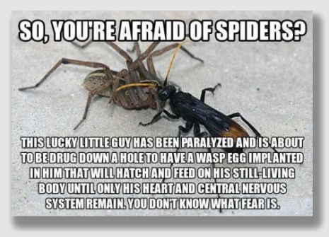spiders150520