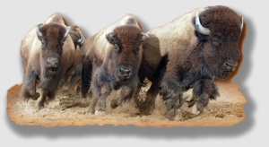 The City of Buffalo was not allowed to stampede over this plaintiff.