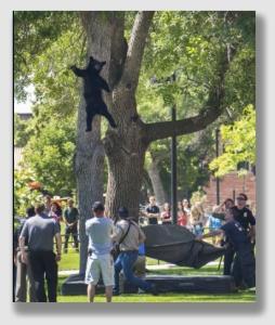 bear150714
