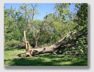 stormtree150730