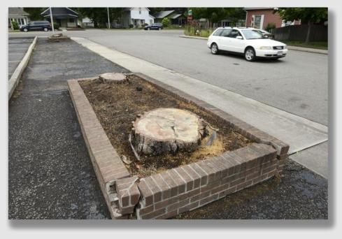 stump150708