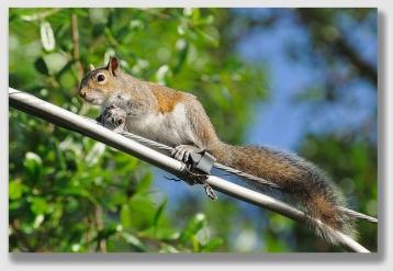 Squirrel - before ...