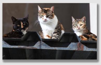 cats151116
