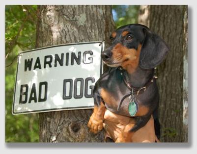 baddog160108