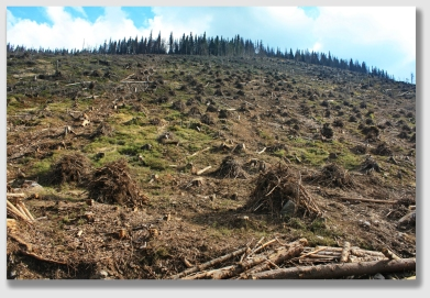 Mr. Pitts wasn't sure how many trees had been cut, but he said the property was ruined.