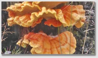 fungus160301