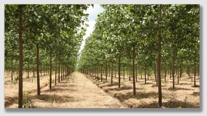 reforest160104