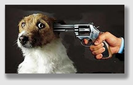 shootdog160106