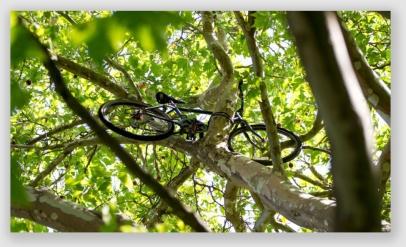 bike169628