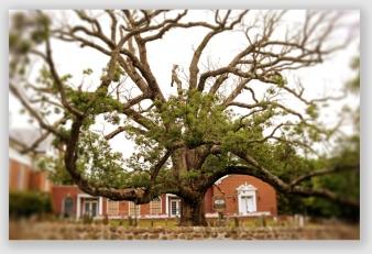 falltree160628