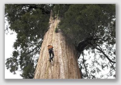 sequoia160721